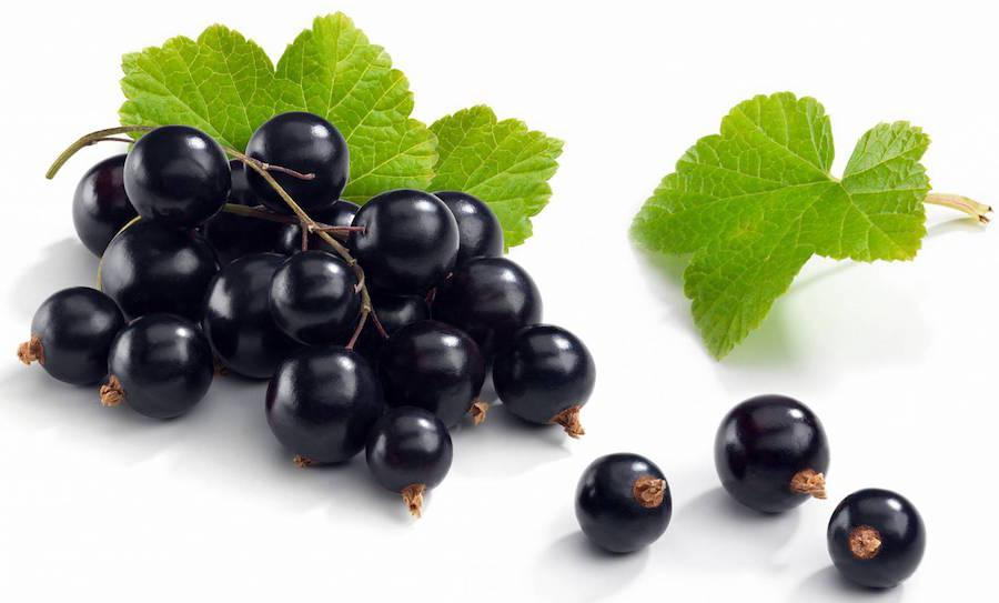 Черная смородина не рекомендуется при панкреатите